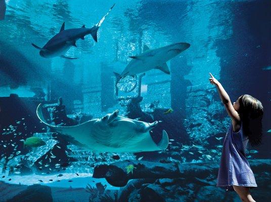 Marine Habitat at Atlantis