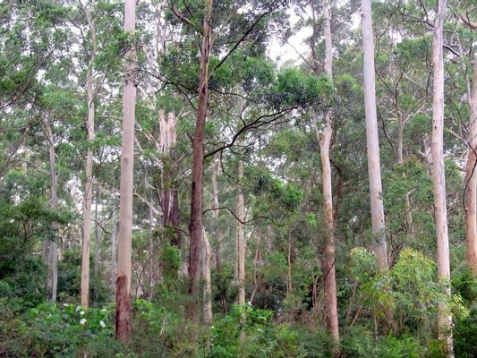 Blackbutt Nature Reserve