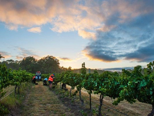 Robert Stein Winery & Vineyard