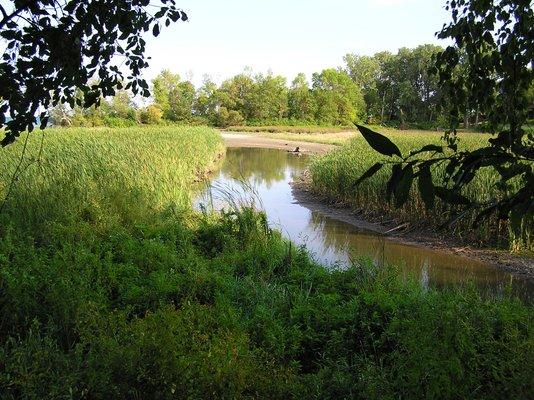 Rattray Marsh Conservation Area