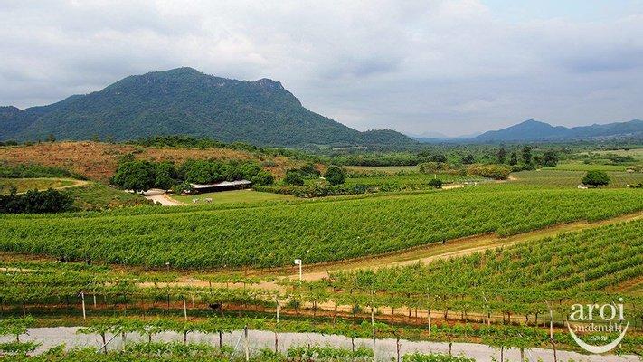 Monsoon Valley Vineyard