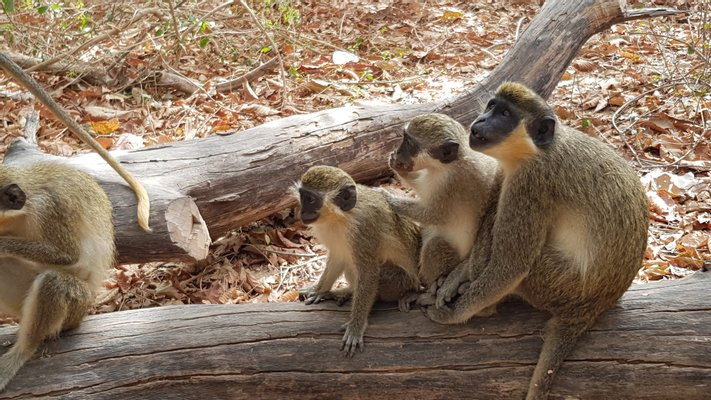 Bijilo National Park