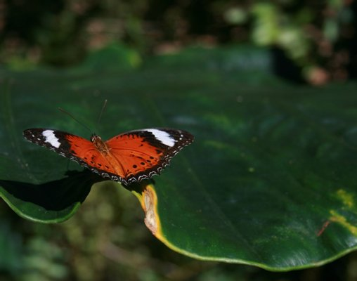 Batchelor Butterflyfarm
