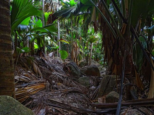 Vallée de Mai, Praslin, Seychelles