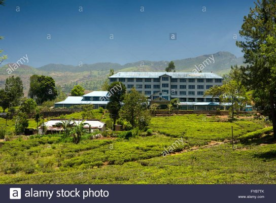 Blue Field Tea Center