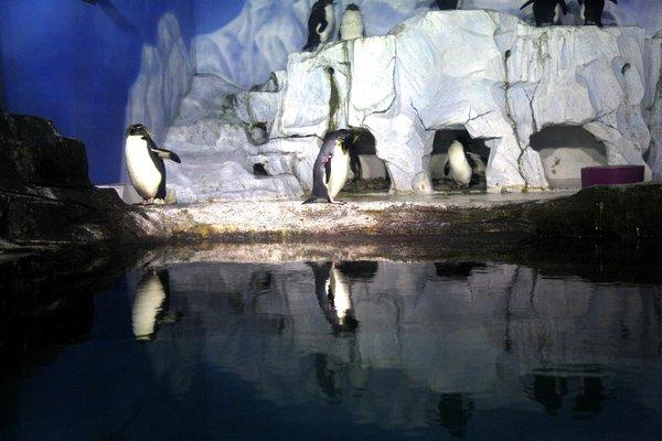 Laohutan Polar Park