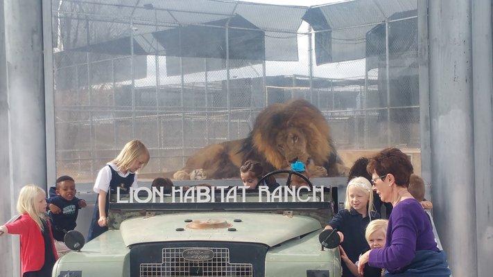 Lion Habitat Ranch inc