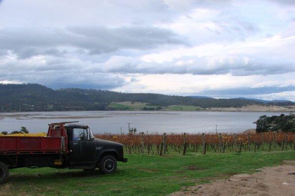 Derwent Estate Vineyard