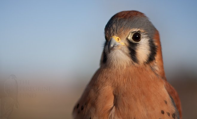 The Peregrine Fund's World Center For Birds of Prey