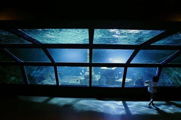 Aquarium of Reunion