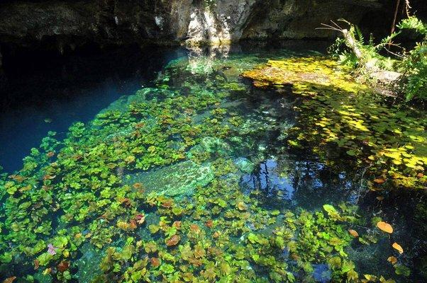 Cenotes Sac Actún