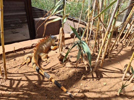 Tenerife Zoo Monkey Park