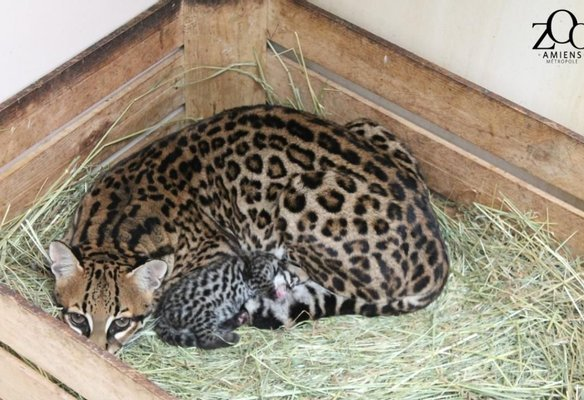 Zoo Amiens Métropole