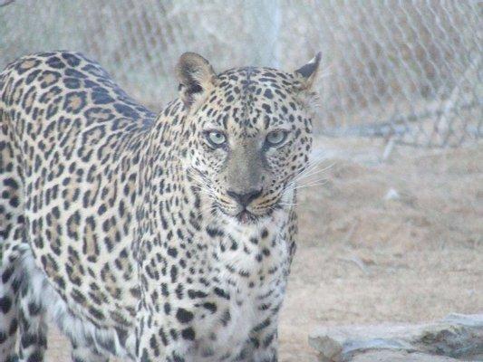 Arabia's Wildlife Center
