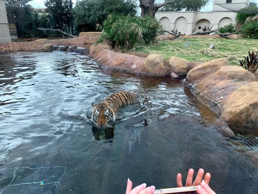 Mike the Tiger's Habitat