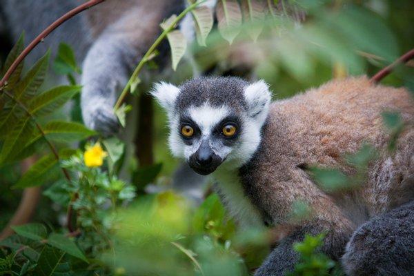 Lemur Park