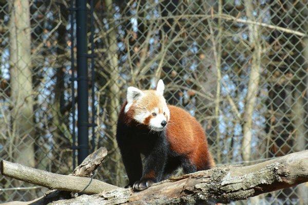 Oglebay Good Zoo