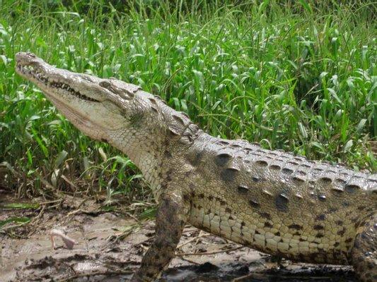 Jungle Crocodile Safari & Bird Watching Tour