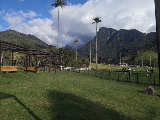 Donde Juan B Bosques de Cocora Valle De cocora