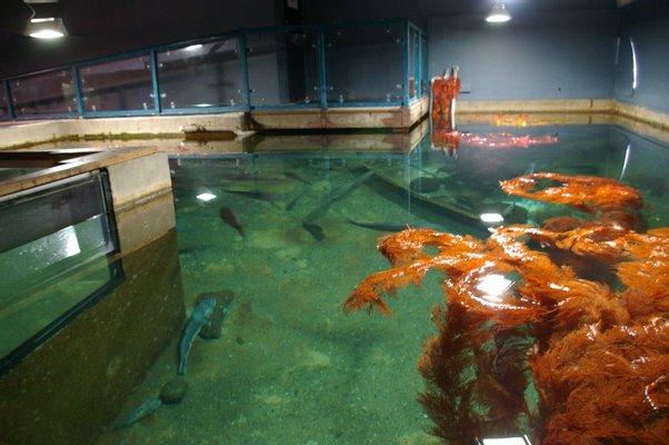 EcoWorld Aquarium & Wildlife Rehabilitation Centre