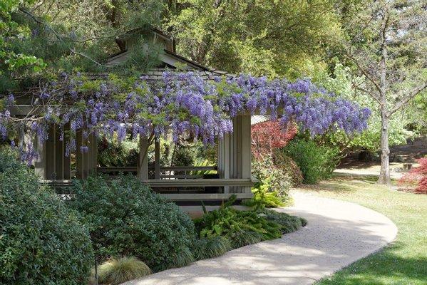 Shinzen Friendship Garden Inc.
