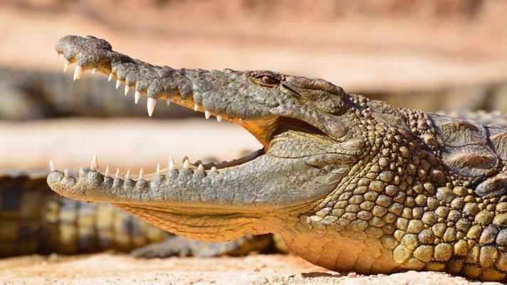 Agadir Crocodile park