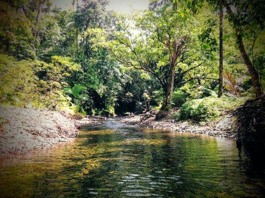 Cooper Creek Wilderness Daintree Rainforest