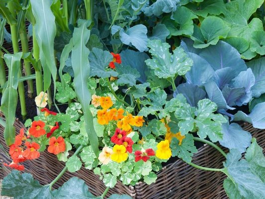Edible Ornamentals @ Cherwood Nursery