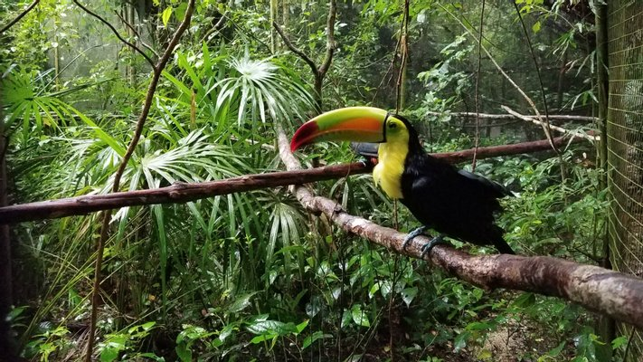 The Belize Zoo and Tropical Education Center