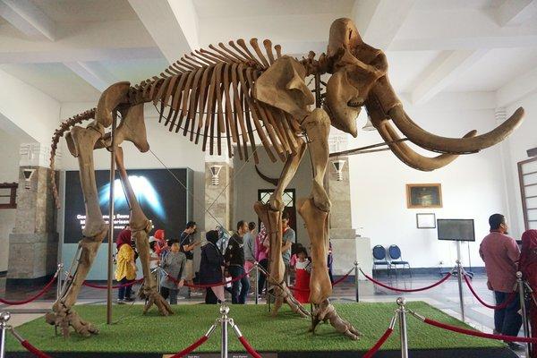 Bandung Geological Museum