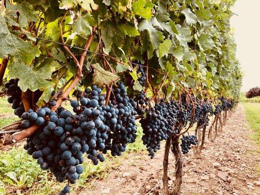 Megalomaniac Wines & Megalomaniac Food+Drink