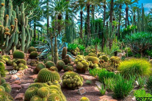 Jardín Huerto del Cura