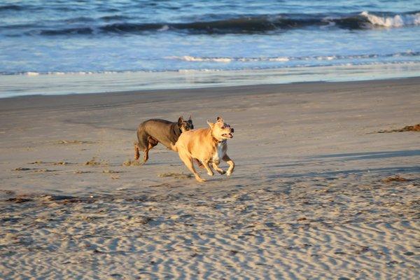 Coronado Beach & Dog Park
