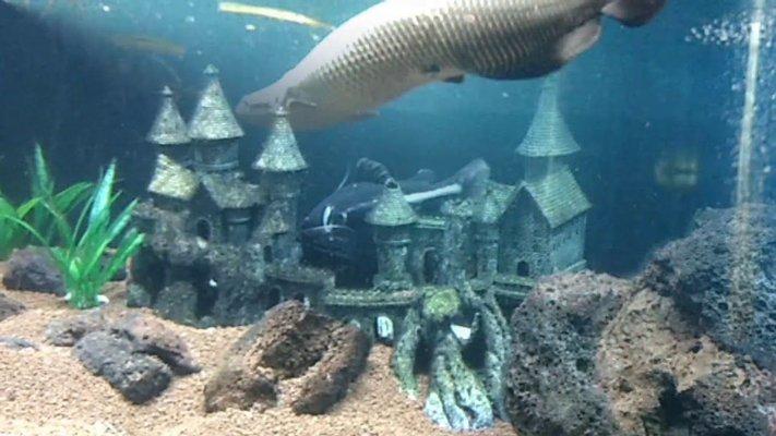 Jagdishchandra Bose Muncipal Aquarium