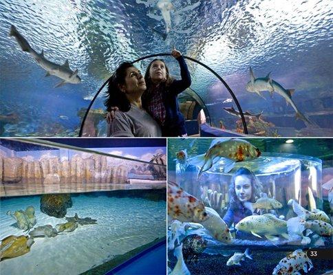 Eskişehir Metropolitan Municipality ETI Underwater World
