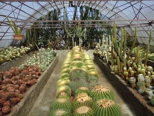 Pine View Nursery