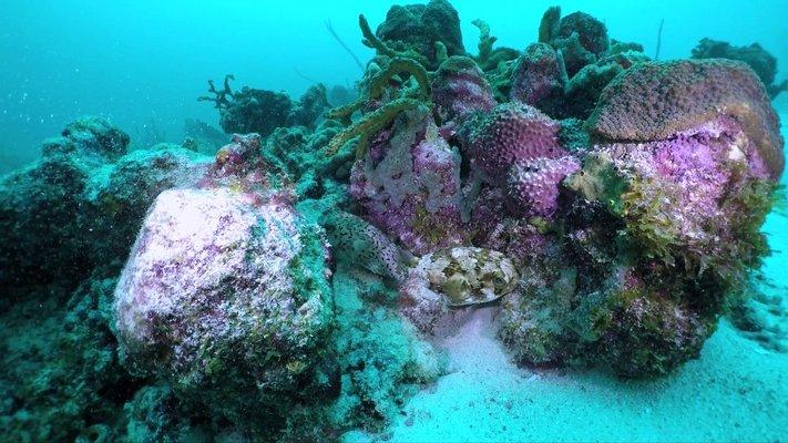 Seahorse Divers Barbados Inc