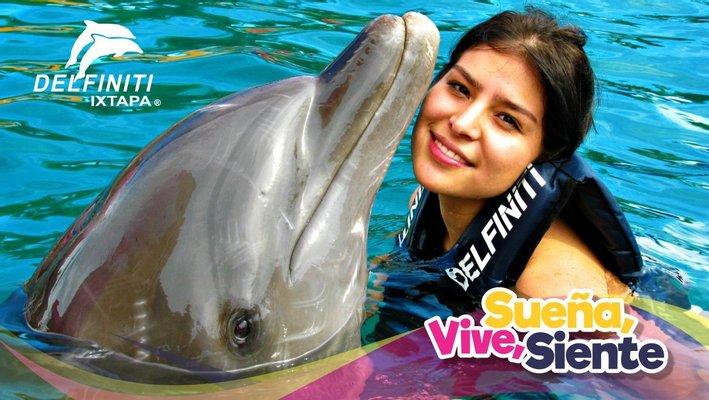 Delfiniti of Mexico