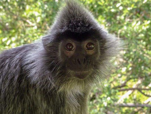 Labuk Bay Proboscis Monkey Sanctuary - Entrance