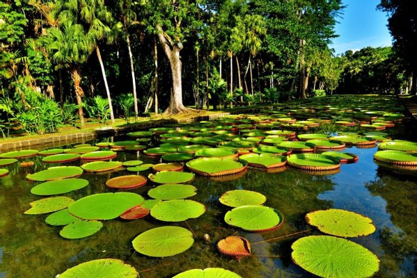 Sir Seewoosagur Ramgoolam Botanic Garden Trust